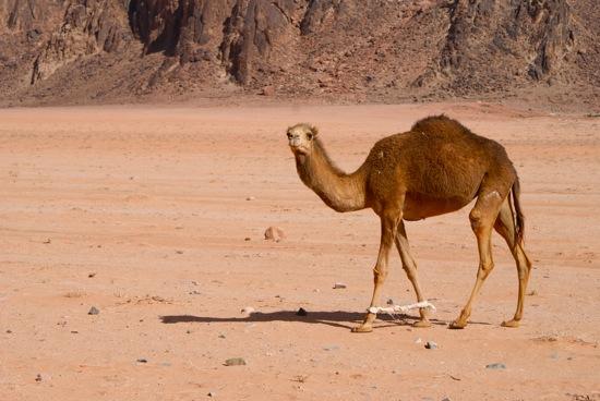 wadi rum jordanie 5