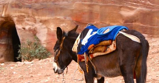 un ane à Petra