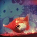 R.I.P. le fish