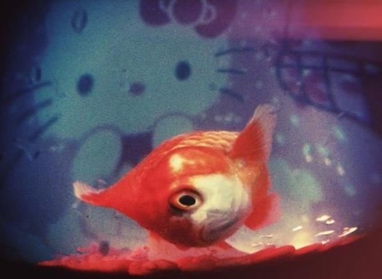 R i p le fish sois belle et parle l 39 ber vie de violette for Poisson de bocal