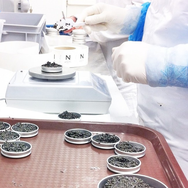 caviar de neuvic 8