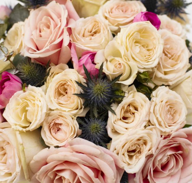 bergamote fleurs