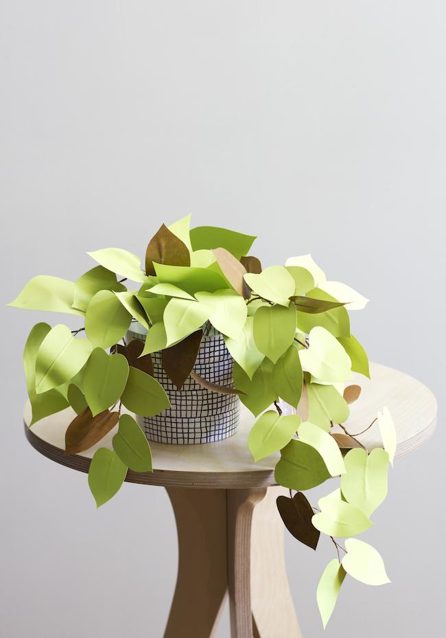 plante en papier 4