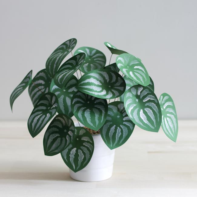 plante en papier 6