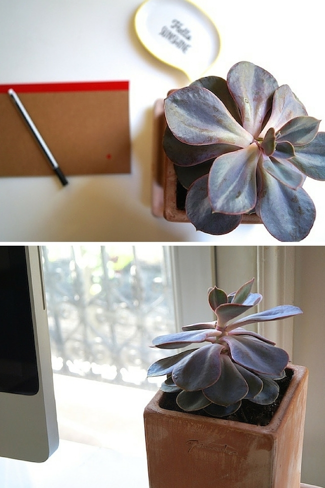 la grande serre sois belle et parle l 39 ber vie de violette. Black Bedroom Furniture Sets. Home Design Ideas