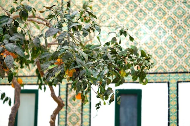 seabel-alhambra-port-el-kantaoui-3